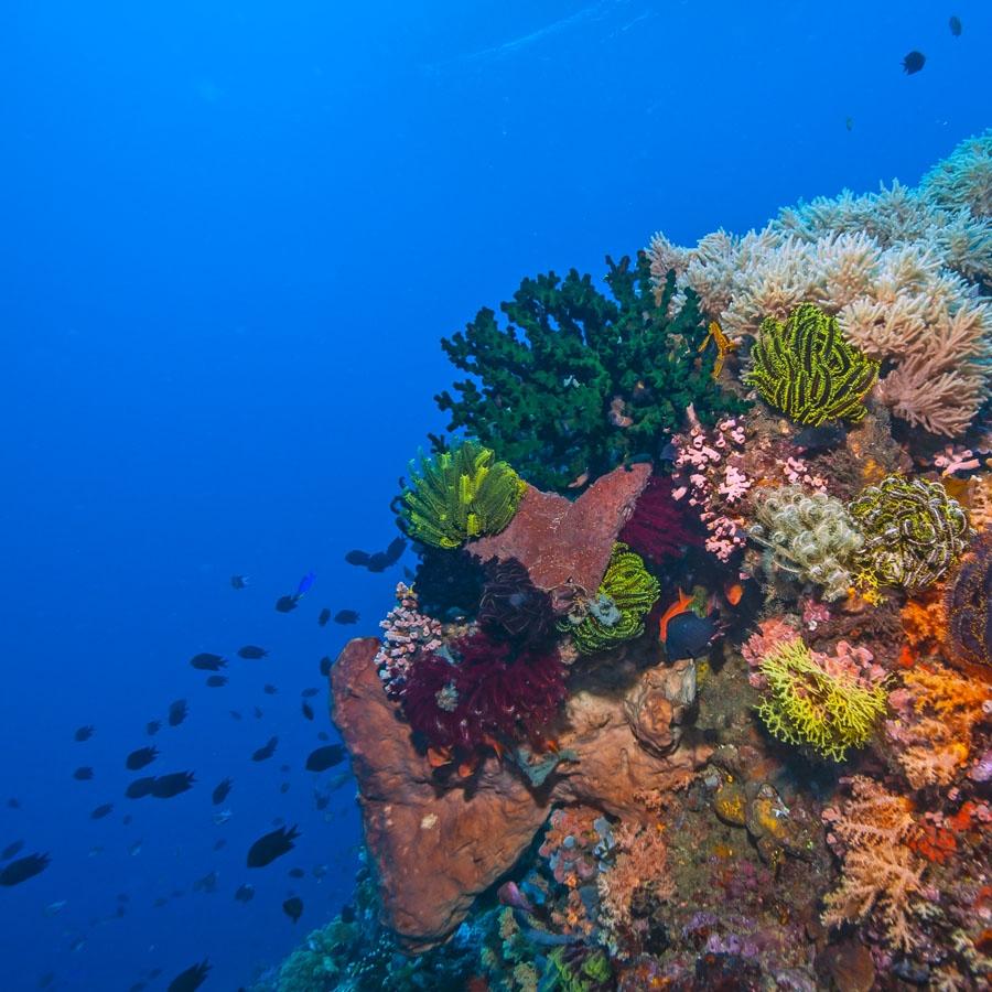 Coral Safari Semi Submarine Ride in Port Blair